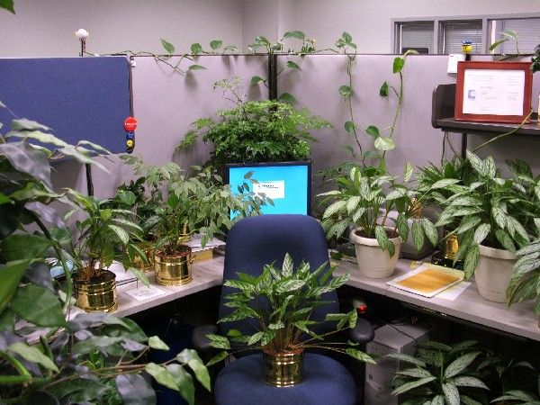 Made me giggle.: 2012 Ideas, Offices Plants, Cubicles Ideas, Cookies Cutters, Work Design, Funny Pranks, Work Ideas, Cubicles Decor, Green Decor