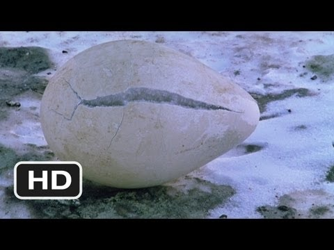 March of the Penguins (1/4) Movie CLIP - Protecting the Egg (2005) HD
