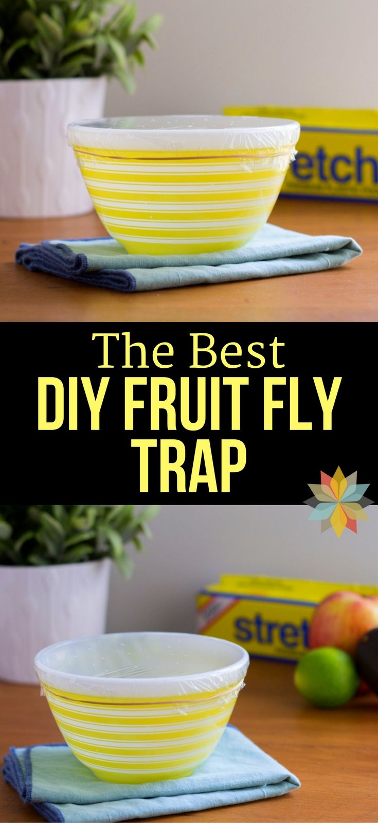 The Best DIY Fruit Fly Trap! Are Pesky Fruit Flies driving you batty? I tried out a bunch of traps, but this is the Best Fruit Fly Trap that I found!  via @wholenewmom