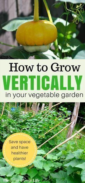 Vegetable garden Aesthetic – Vertical Gardening How to Grow Up in Your Garden……