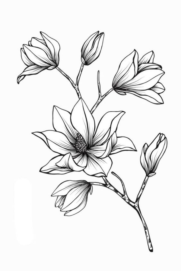 42 Simple And Easy Flower Drawings For Beginners Cartoon District Flower Line Drawings Flower Drawing Flower Sketches