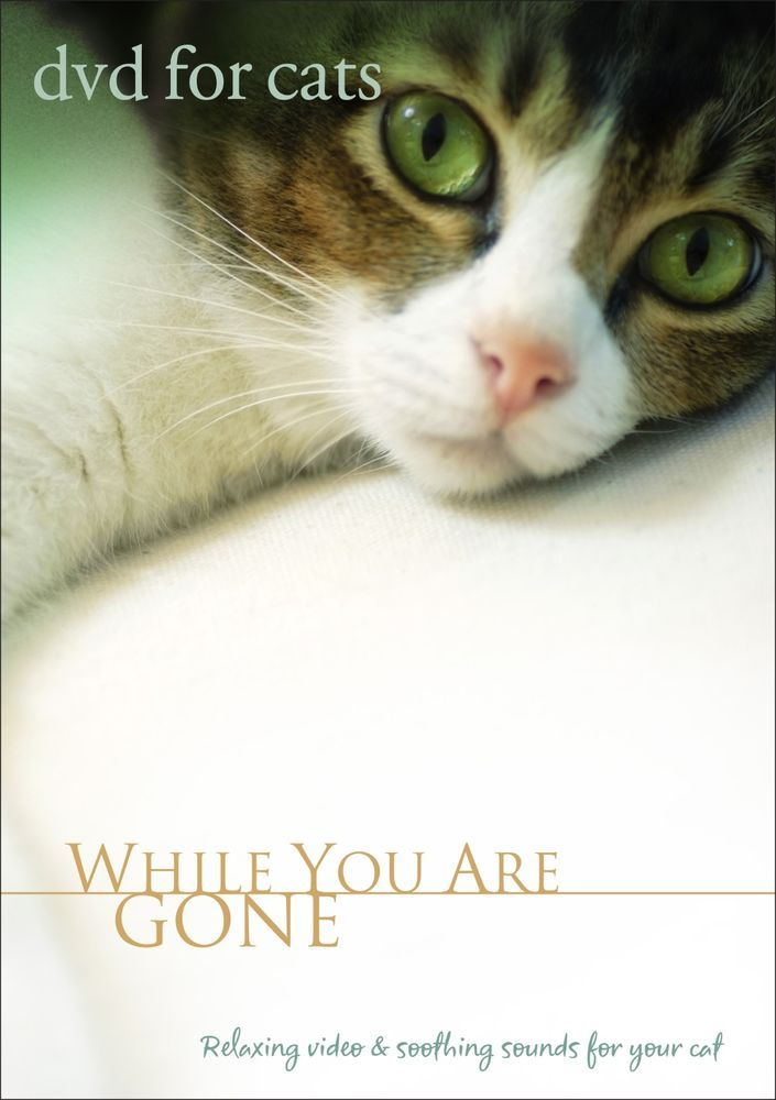 DVD FOR CATS: Cat Sitter, Cat VIDEO FOR CATS, Cat DVD - NEW UNOPENED in DVDs & Movies, DVDs & Blu-ray Discs   eBay