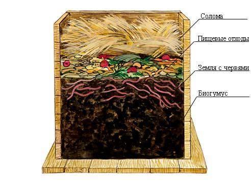 Компостный ящик с дождевыми червями