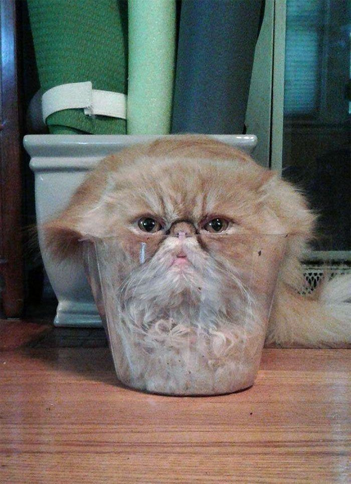 Here Are 15 Photos That Prove Cats Are Basically Made Of Liquid