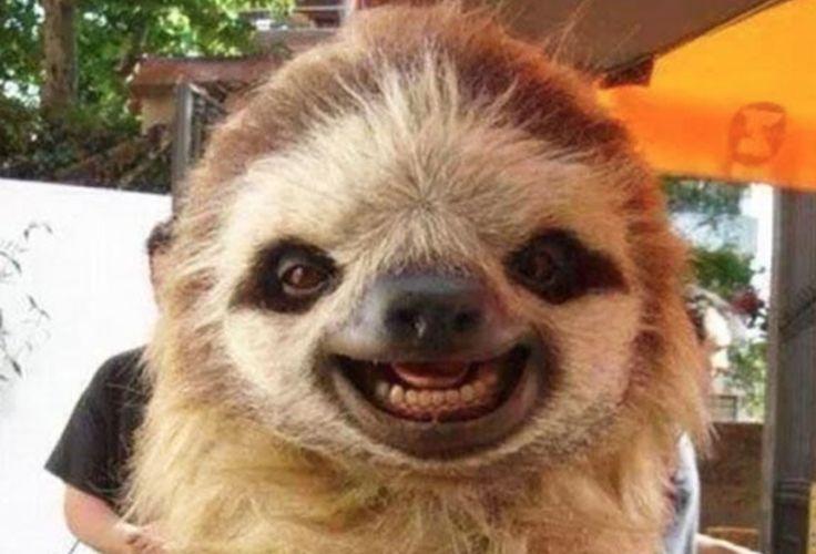 13 bilder på glada djur du behöver i ditt liv just nu