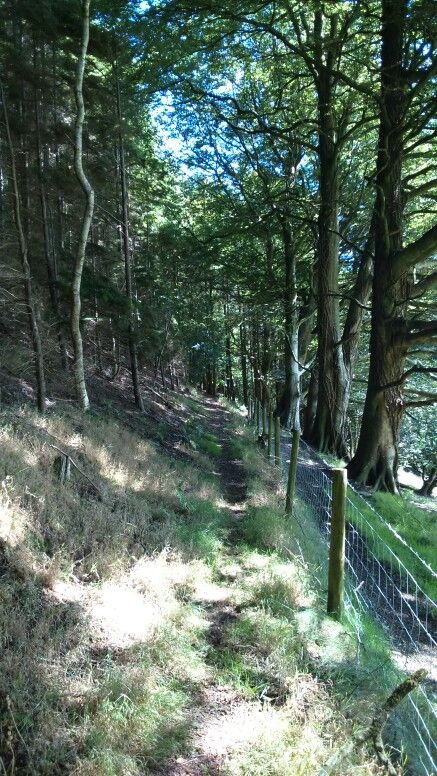 On the way to merlins hill