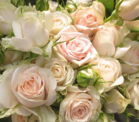 Black Ice Hair Spray >> 52 best images about Spray Roses on Pinterest | Snowflakes, Antigua and Barbados