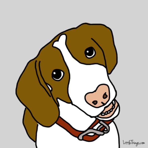 10 manières surprenantes et secrètes qu'a votre chien de vous dire « Je t'aime » !