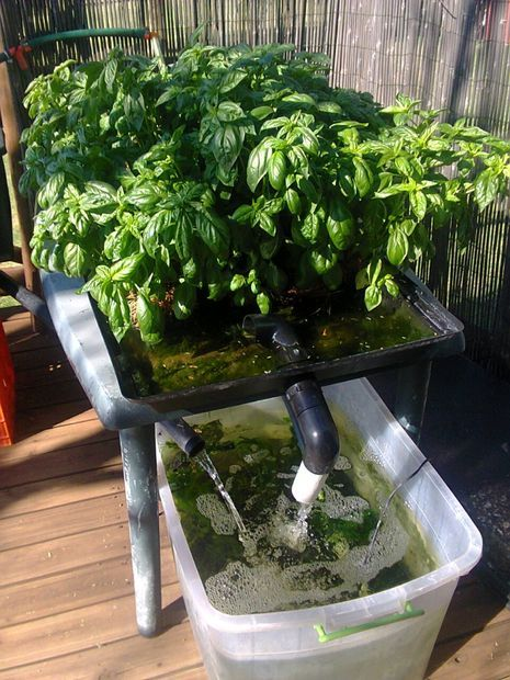 17 best images about growing vegetables hearbs on pinterest gardens vegetables and diy - Hydroponic container gardening ...