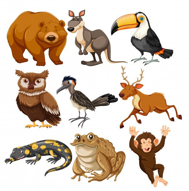 Download Set Of Different Animals For Free