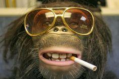 Graciosas imágenes de monos con anteojos | Muchas imágenes para bajar