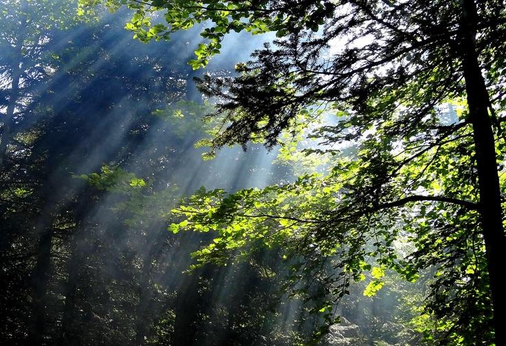 Rais de lumière en forêt (y'a un feu de bois dessous, ça aide...), été 2012