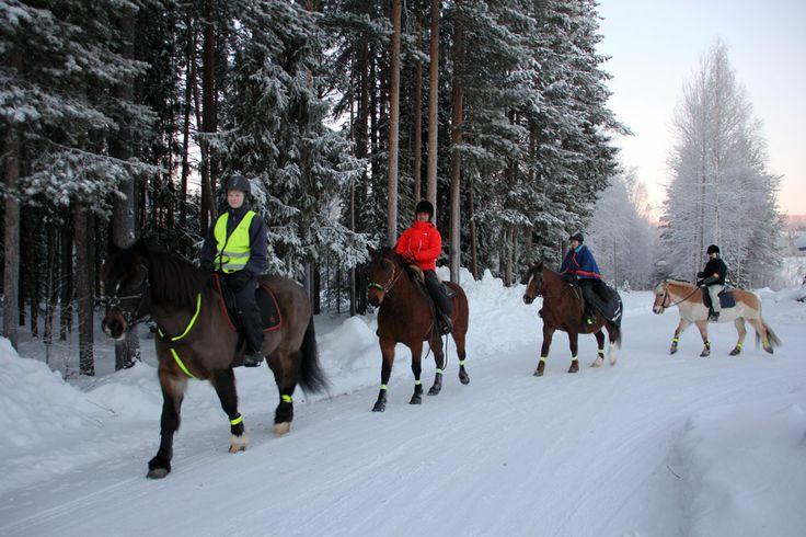 Horseback riding in  Lapland Vuollerim