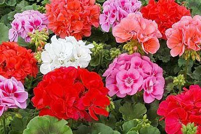 Как да се грижим за цветята през есента