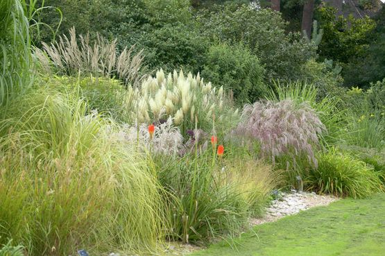 14 besten staudengarten bilder auf pinterest for Landscaping ideas with pampas grass