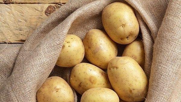 Na skladování brambor je ideální chladný sklep, ale ten má dnes už málokdo.