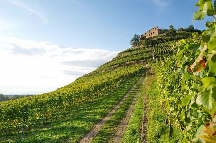 vineyard castle - Germany