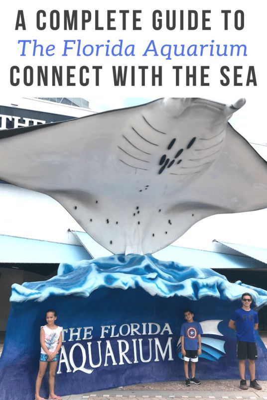 Are You Looking A Fun And Educational Place To Take The Kids Here Is Our Guide To The Florida Aquarium In Tampa This Florida Holiday Florida Travel Florida