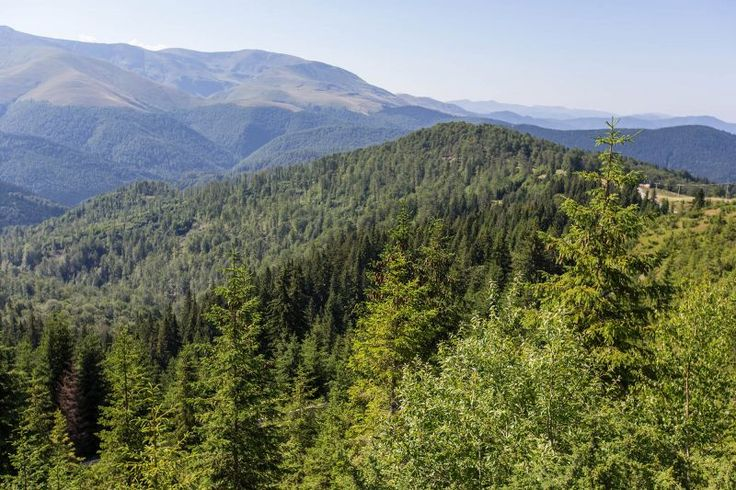 Intact forest landscape, tarcu mountains