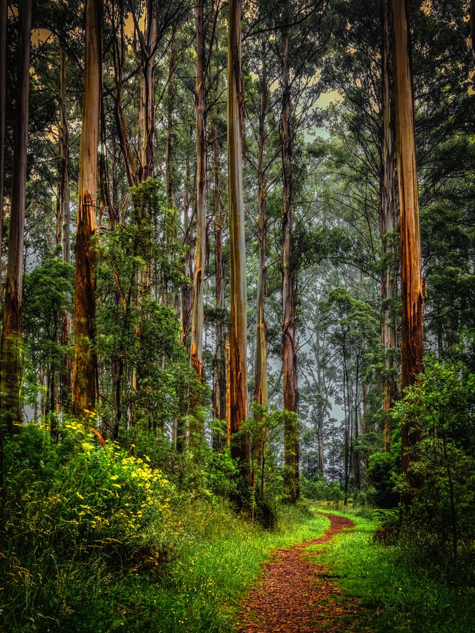 Enchanted Forest by Margaret Netherwood - The Dandenongs, Victoria, Aus