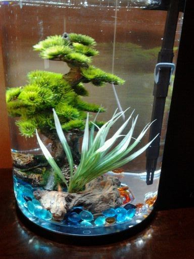 35 best images about beta fish tank ideas on pinterest for Betta fish bowl ideas