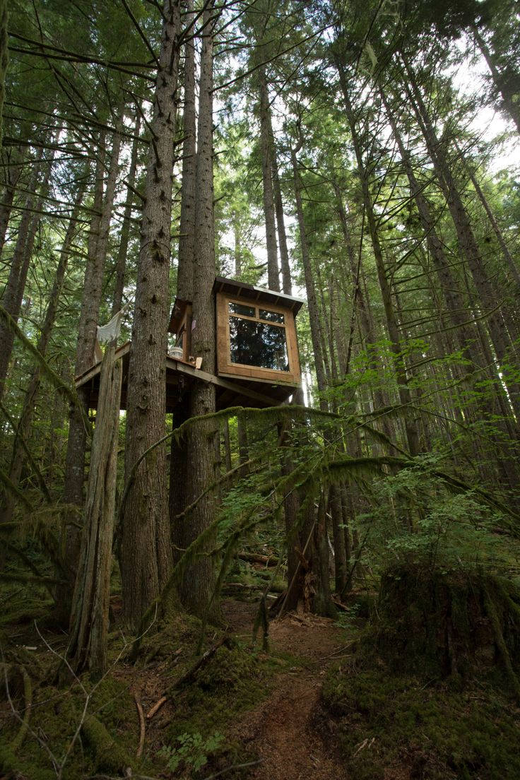 http://cabinporn.com/post/103462894757/treehouse-built-from-salvaged-materials
