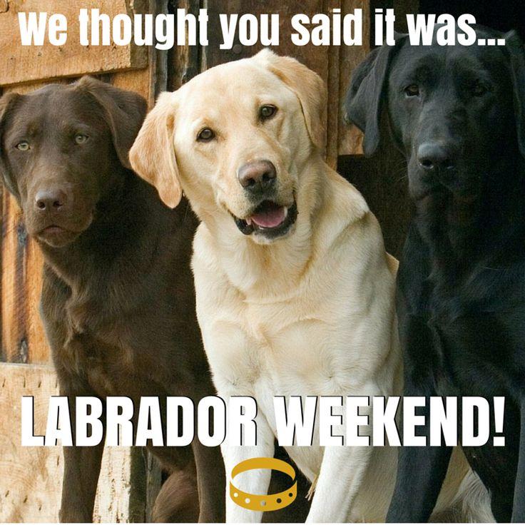 Labor Day Dog Photos