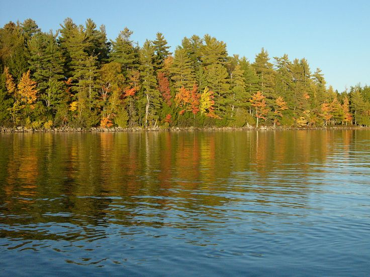 President Trump has just signed an executive order to begin the process of repealing the Waters of the U.S. rule, which expanded federal protection of the country's streams and wetlands. At the Rainforest Alliance, we're proud of our work to protect American forests, like this one in Maine's Downeast Lakes region, through sustainable forestry and forest-carbon verification. These projects keep America's forests and waterways healthy while boosting economic prospects for local communities.