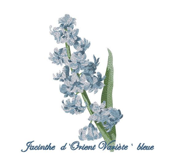 Blue Hyacinth  Flowers Machine Embroidery Design 3 design set  Instant Download