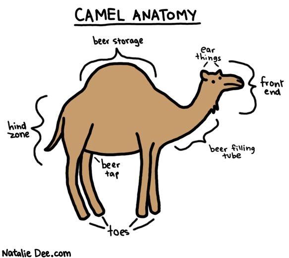 Comic by Natalie Dee: camel anatomy