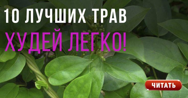 10 лучших трав для уничтожения жира в области живота и выведения токсинов! | Будете Здоровы