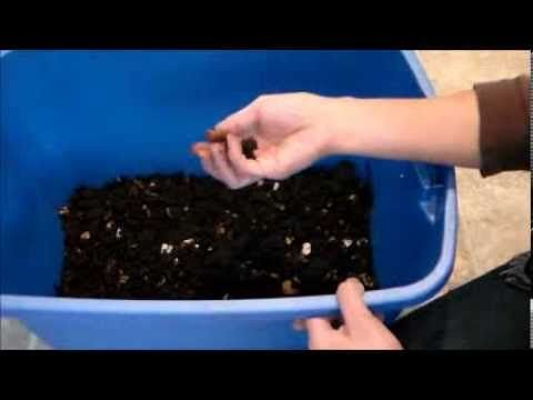 EZ Way to Harvest Worm Castings! Vermicomposting at Home