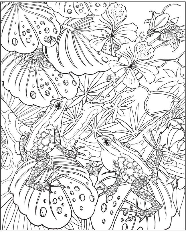 838 best Adult Coloring Pages images on Pinterest Coloring books - fresh coloring pages tree frog