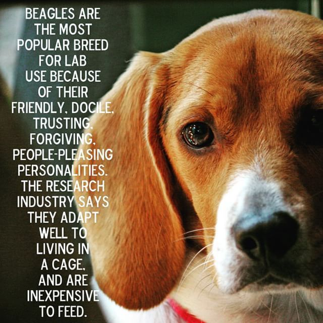 Scientists told: reduce animal experiments