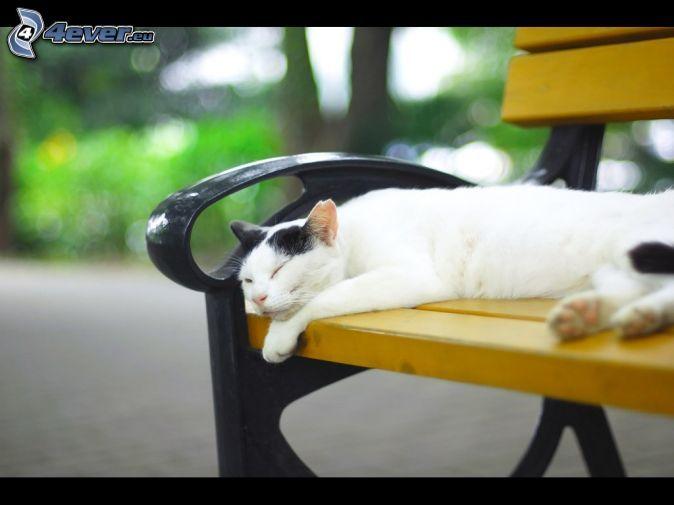 gatto addormentato, panchina (cambiare)