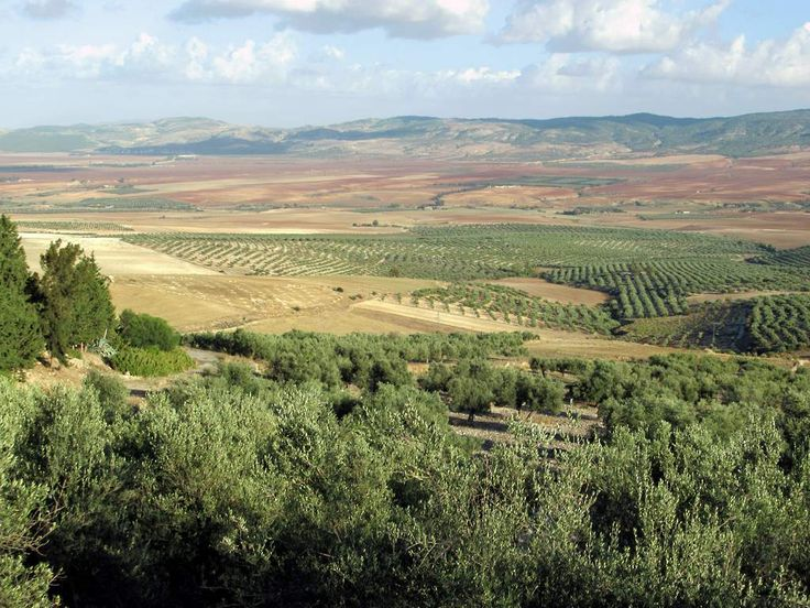 The Roman archaeological site at Dougga, Tunisia, overlooks a fertile plain planted with orderly rows of olive trees.