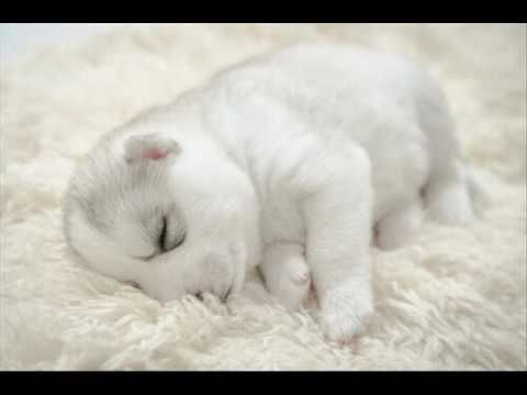 Musica per il tuo sonno cane - Musica rilassa il vostro animale domestico - YouTube