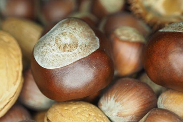 #chestnuts