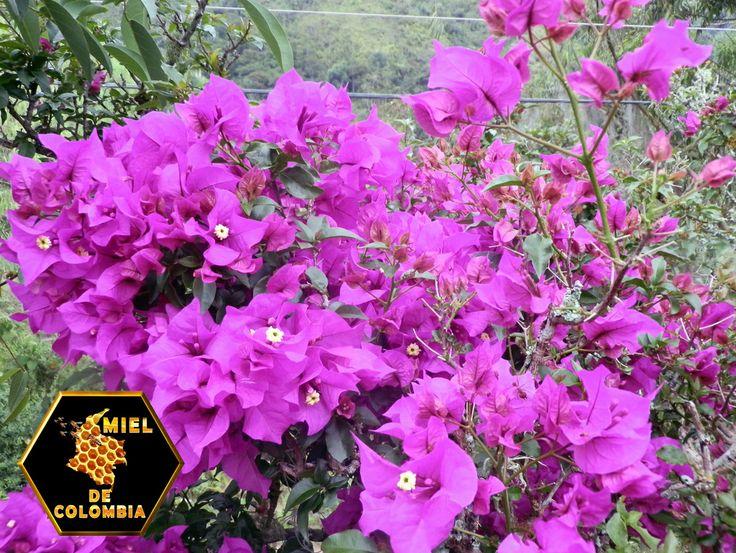"""Las plantas tienen flores adaptadas a distintos tipos de agentes polinizadores, entre los que sobresalen: El viento o polinización """"Anemófila"""", el agua, los animales, (pájaros, murciélagos, roedores) los insectos llamada """"polinización entomófila"""" y otros agentes."""