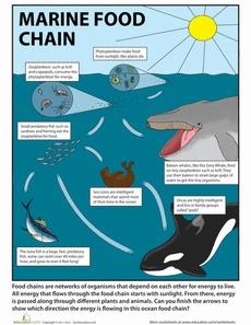 Ocean Food Chain | Worksheet | Education.com