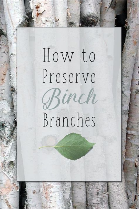 How To Preserve Birch Tree Branches Christmas Birch Tree Decor