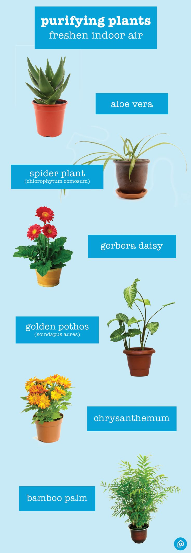 Did you know that some plants help naturally clean the air in your home? It's true! Get started with these plants: Aloe Vera, Spider plants, Gerbera Daisies, Golden Pothos, Chrysanthemums, and Bamboo Palms.