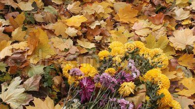 Fall leaves and bouquet of yellow and purple chrysanthemums on the ground.