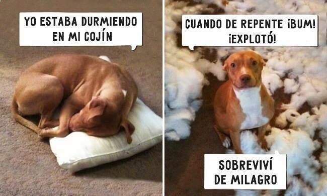 Imagenes de Humor #memes #chistes #chistesmalos #imagenesgraciosas #humor www.megamemeces.c... ➡ http://www.diverint.com/imagenes-graciosas-cargador-celular