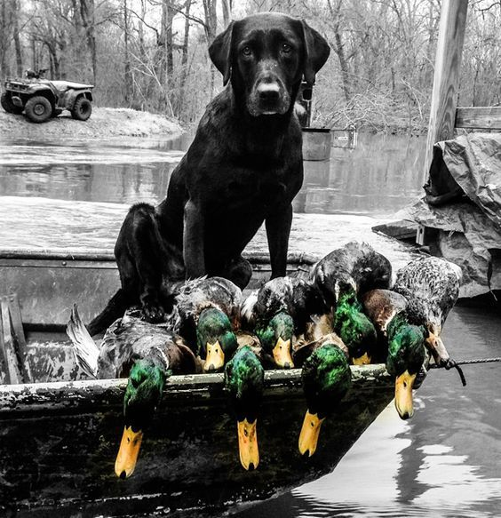Duck hunting consumes my life. The whole family hunts together and has been hunting together for generations.