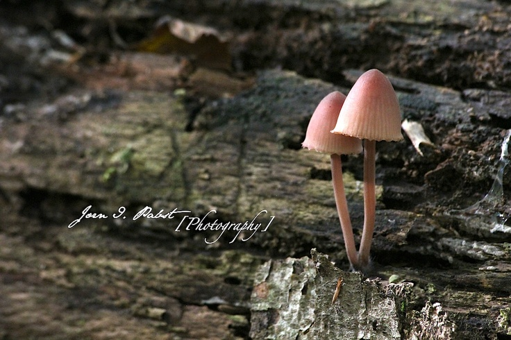 fall, autum, mushrooms, photography