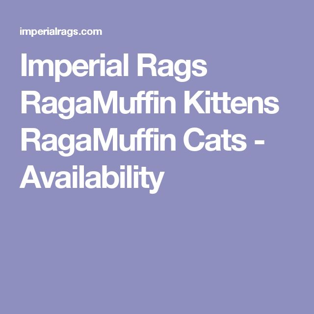 Imperial Rags RagaMuffin Kittens RagaMuffin Cats - Availability