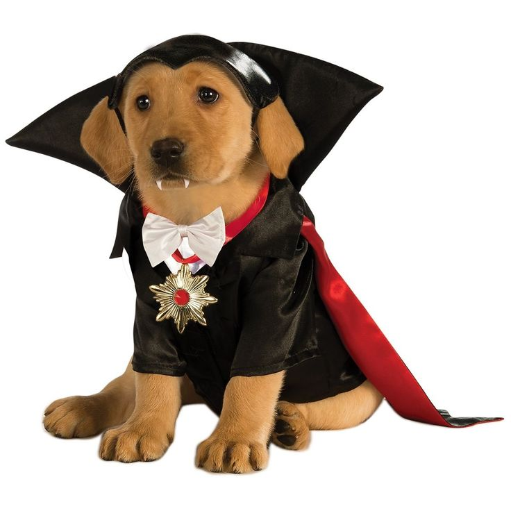puppy in dracula halloween costume