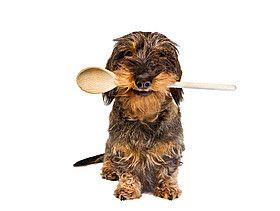 Easy Dogs / Brix' Saftige Hundekekse mit Apfel und Karotte, Hundekeksrezept von Sabine Hahndl, Easy Dogs Feinschmeckerguide, Österreich