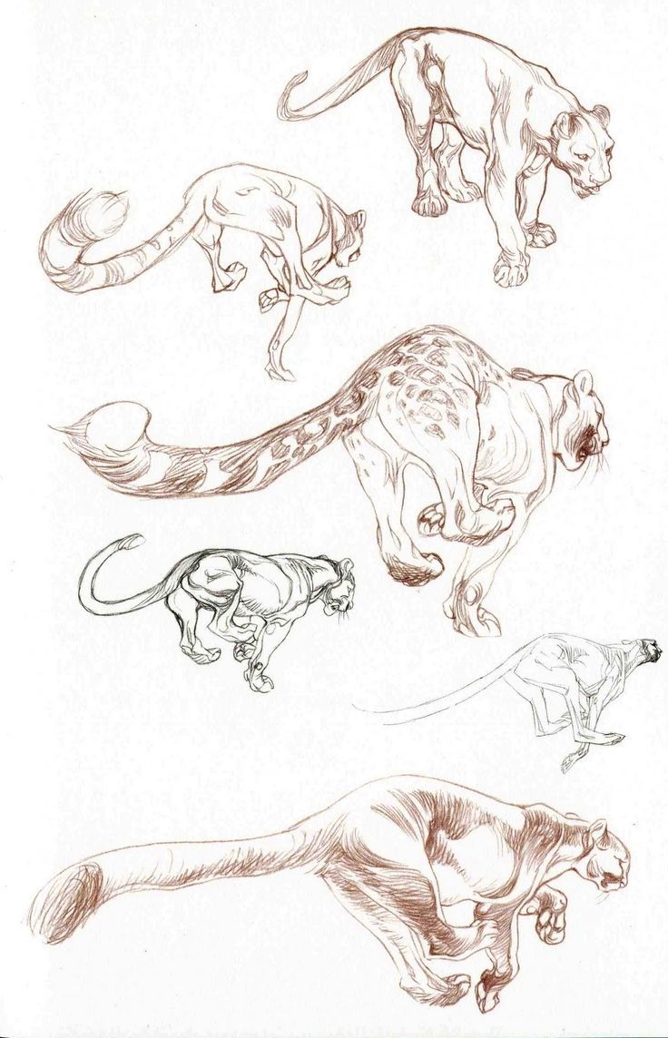 Art Of Animal Character Design Pdf : Best claire wendling images on pinterest character